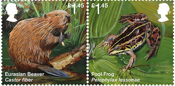 Spring stamp release to celebrate the success of reintroduced species