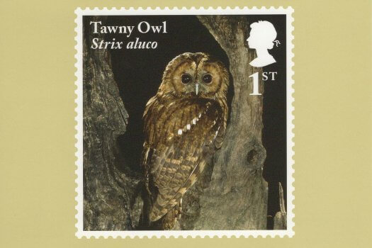 Owls Stamp Cards Back image 1