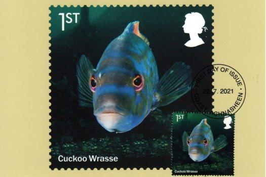 Wild Coasts Stamp Cards image 1